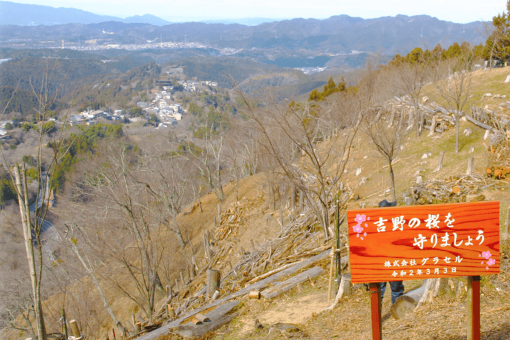 吉野山への桜の植樹2